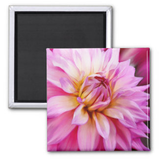 Pink Dahlia 2 Inch Square Magnet