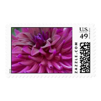 Pink Dahlia Blossom Postage