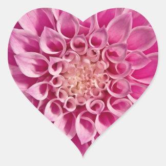 Pink Dahlia Close Up Heart Sticker