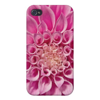 Pink Dahlia Close Up iPhone 4/4S Cases