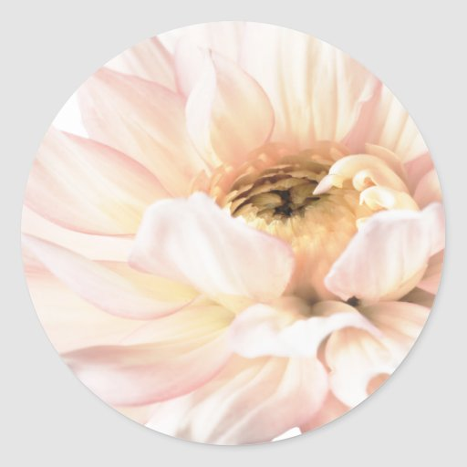 Pink Dahlia Flower - Dahlias Customized Template Stickers