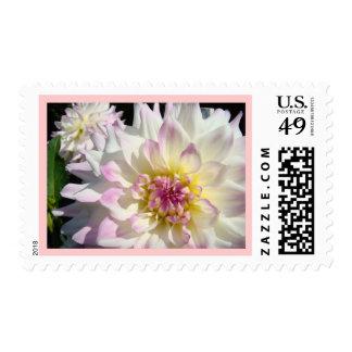 Pink Dahlia Flower White Floral Dahlia postage