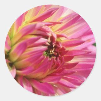 Pink Dahlia flowers Round Stickers