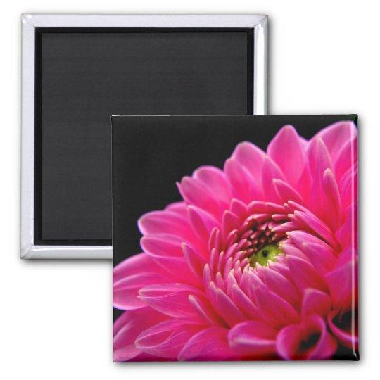 Pink Dahlia Magnet
