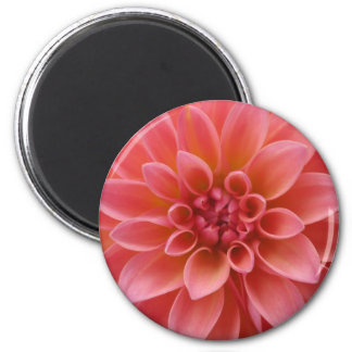 Pink Dahlia Magnets