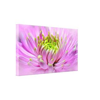 Pink Dahlia Ornamental Flower Canvas Print