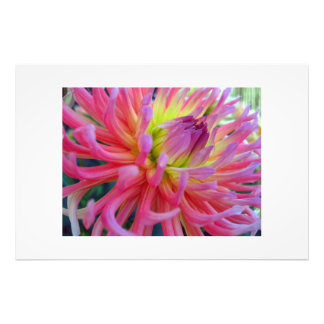 Pink Dahlia Art Photo