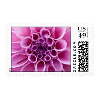 Pink Dahlia Postage Stamp