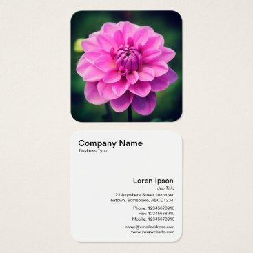 Professional Business Pink Dahlia Square Business Card