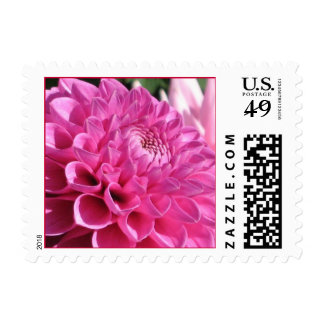 Pink Dahlia Stamp