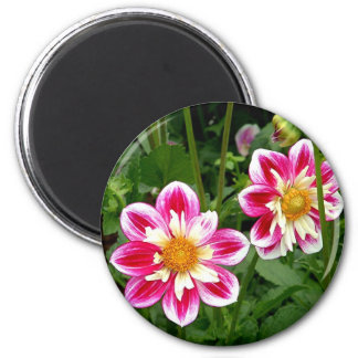 """Pink Dahlias...double trouble"" 2 Inch Round Magnet"