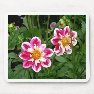 """Pink Dahlias...double trouble"" Mouse Pad"
