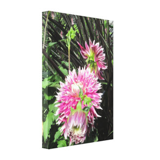 Pink Dahlias Wrapped Canvas Canvas Print