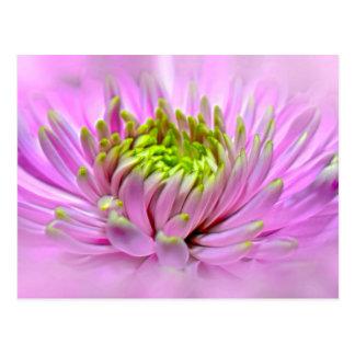 Pink Dahlie Ornamental Flower Postcard