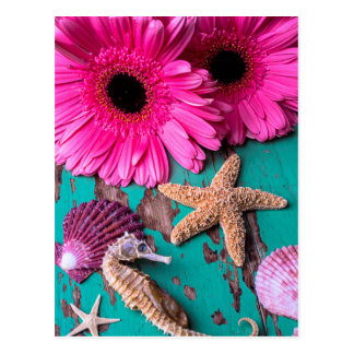 Pink Daises And Seahorse With Starfish Postcard