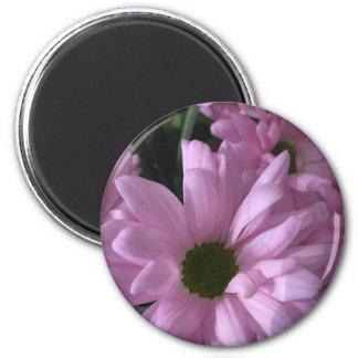 Pink Daises Magnet