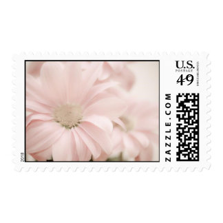 Pink Daises Stamps