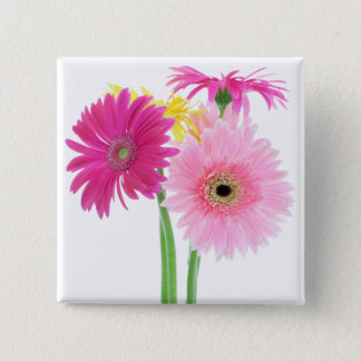 Pink Daisies Button