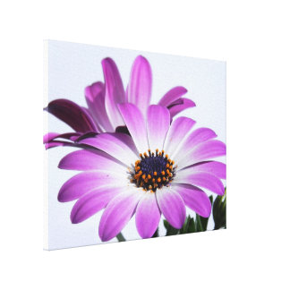 Pink daisies - canvas