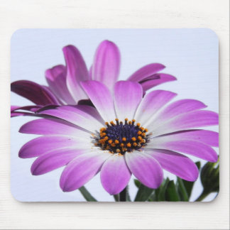 Pink daisies - mouse PAD