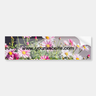 Pink Daisies On A Sunny Day Car Bumper Sticker