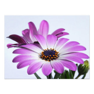 Pink daisies - photo printings