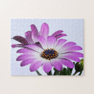 Pink daisies -  Puzzle