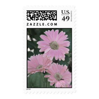 Pink Daisies stamps