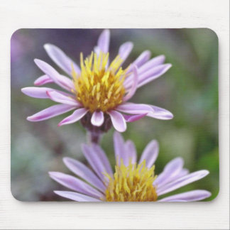 Pink Daisies W/ Yellow Centers flowers Mouse Pad