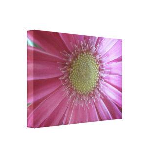 Pink Daisy Beauty Canvas Print