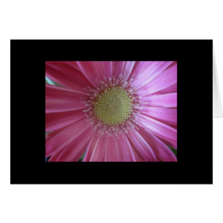 Pink Daisy Beauty Greeting Cards