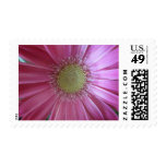 Pink Daisy Beauty Postage