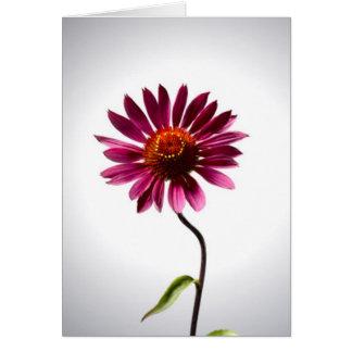 Pink Daisy Card