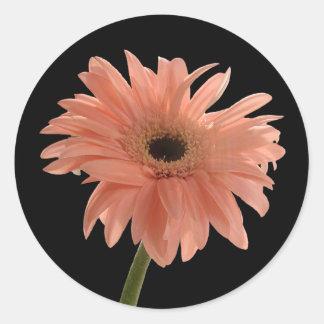 Pink Daisy Classic Round Sticker