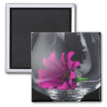 Pink Daisy Closeup In A Wine Glass 2 Inch Square Magnet