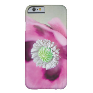Pink Daisy Flower Close-Up iPhone 6 Cover Cases