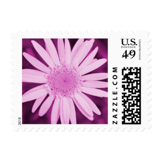 Pink Daisy Flower Customizable Postage