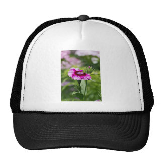 Pink Daisy  Flower Trucker Hat