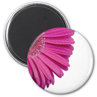 Pink daisy flower with water drops beautiful gift 2 inch round magnet