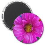 Pink Daisy Fridge Magnet