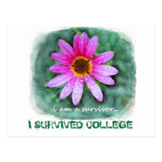 Pink Daisy I am a Survivor Postcard
