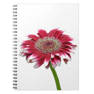 pink daisy notebooks