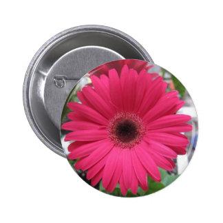 Pink Daisy Pinback Button