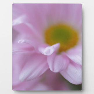 Pink Daisy Plaque