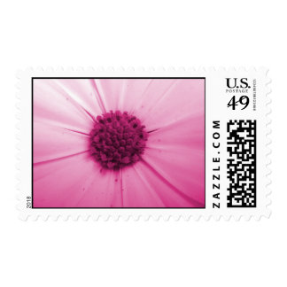 Pink Daisy Postage