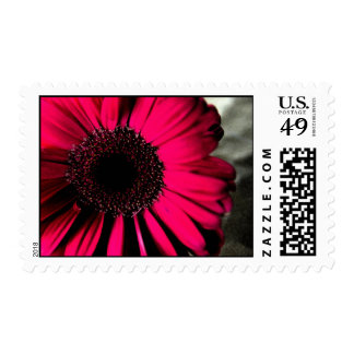 Pink Daisy Postage Stamp
