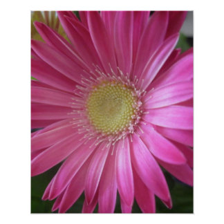 Pink Daisy Princess Poster