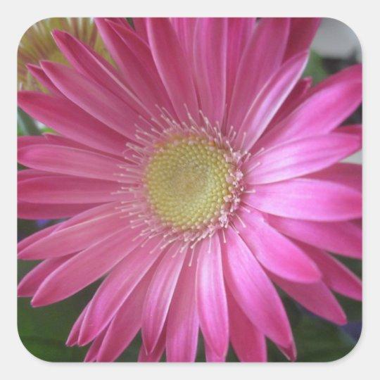 Pink Daisy Princess Square Sticker