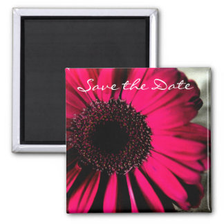 Pink Daisy Save the Date Magnet