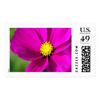 Pink Dancer Large Stamp